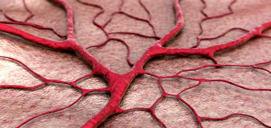 capillaries - blog header